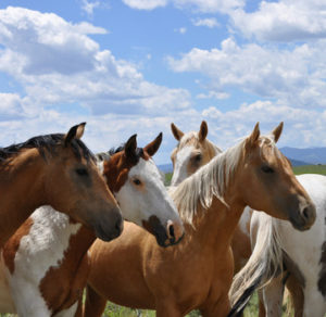 horse-back-riding