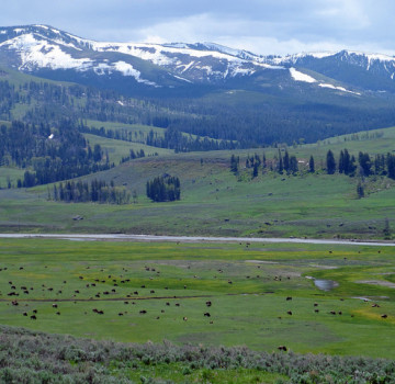 lamar-valley